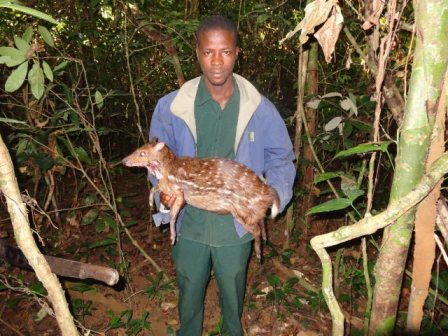 Guide Edwin Brophy holding Ken's WATER CHEVROTAIN